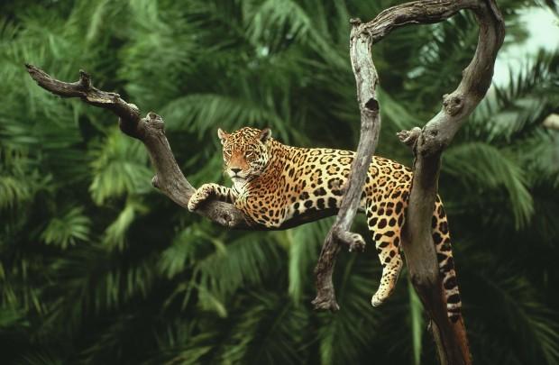 Most-Beautiful-Amazon-Rainforest-Wallpaper